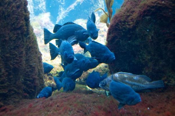Monterey Bay Aquarium   Social Wave 2.0 Beta