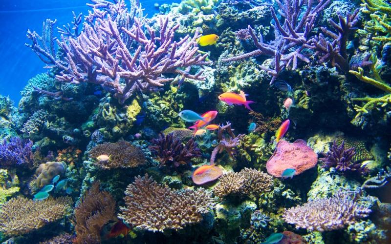 Monterey Bay Aquarium Admission Free for Military on ...